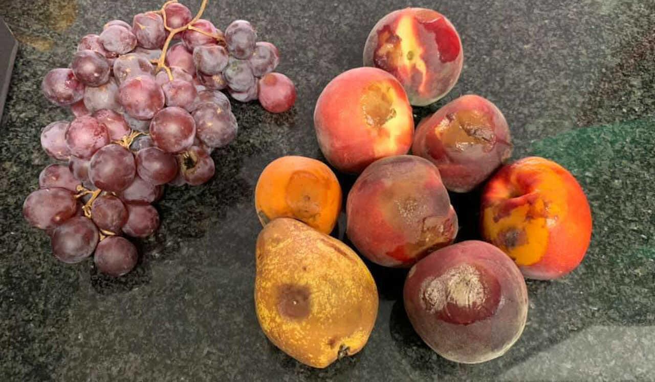 too good to go magic box fruta podre