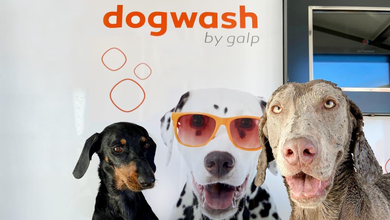 lavagem para cães