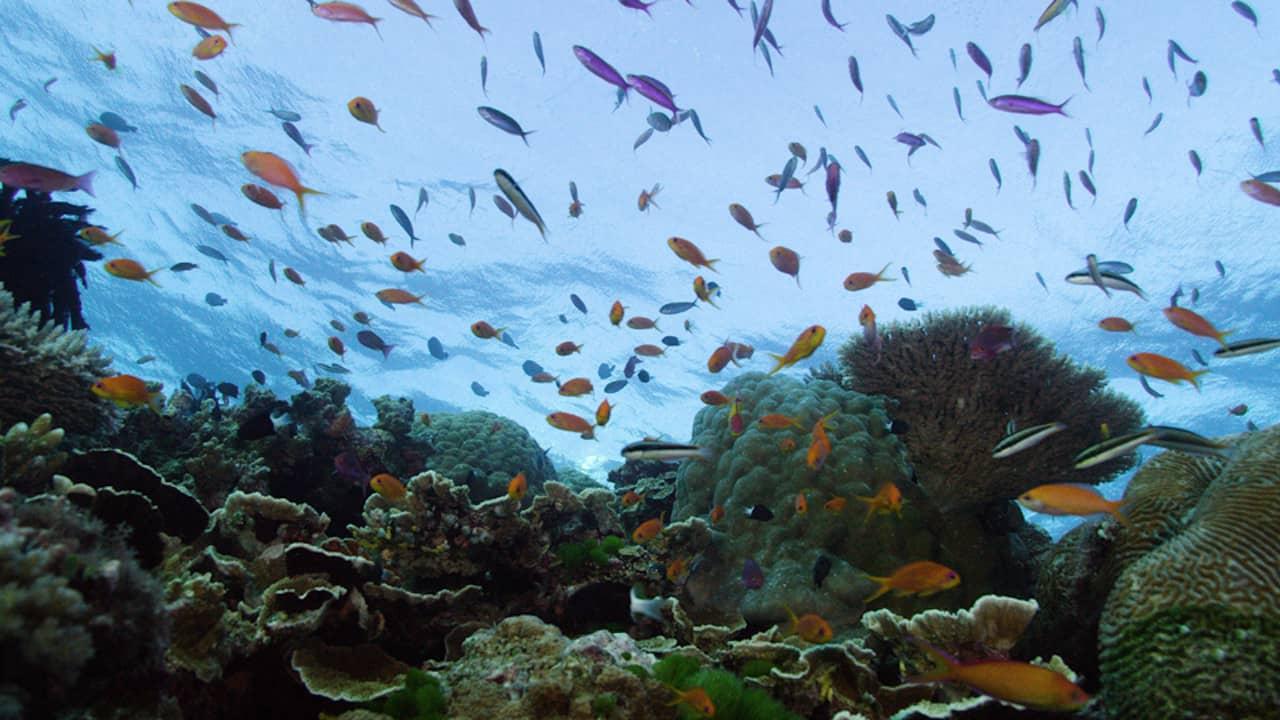 Grande Barreira de Coral